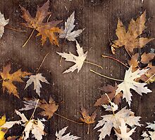 Fallen Leaves by DavePlatt