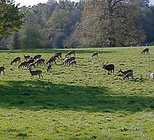 Studley Royal again 5 by dougie1