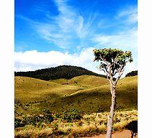 Horton plains by Thushan Sanjeewa
