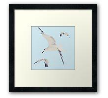 1989 Seagulls Framed Print