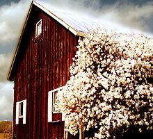 bloomin' barn by Andrew Hoisington