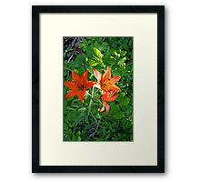 Wood Lily (Tiger Lily) Framed Print