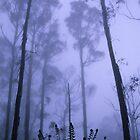 Mountain Mist by Travis Easton