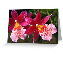 Red-pink & White Orchids (Zygopetalum) Greeting Card