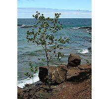 Superior tree Photographic Print