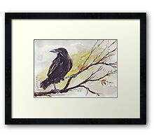 Crow on a bough Framed Print