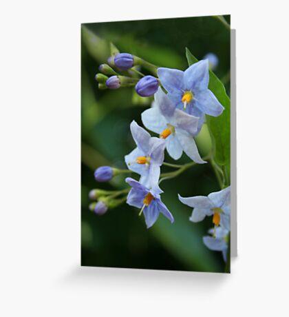 "blue  solanum jasminoides (""potato vine"") Greeting Card"