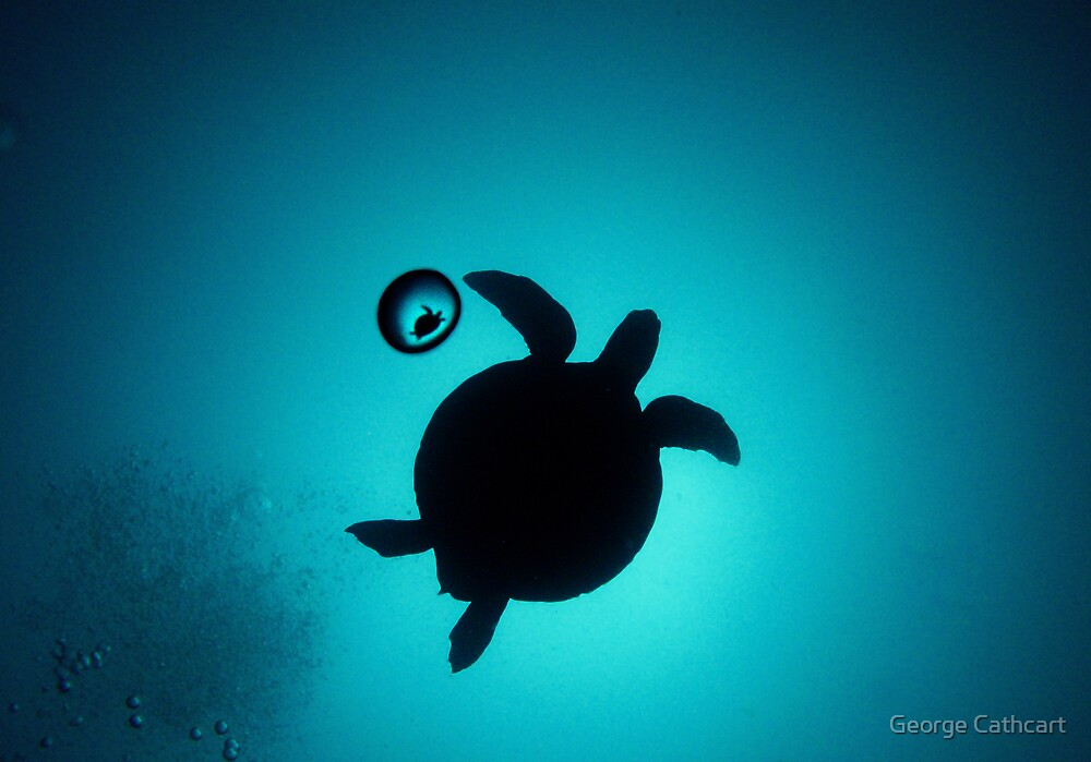 Turtle in a Bubble by George Cathcart