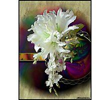 White Satin Blossoms Photographic Print