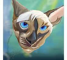 Siamese cat done in sketch club Photographic Print