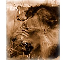 Lions on the Hunt - Photo Painting Photographic Print