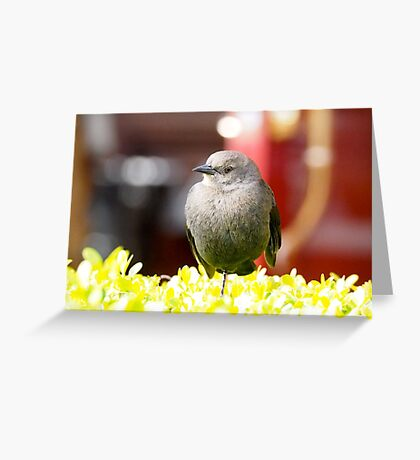 Just resting Greeting Card