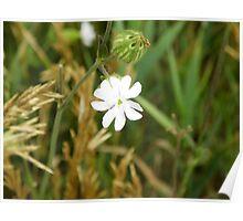 Flowers Bloom Poster