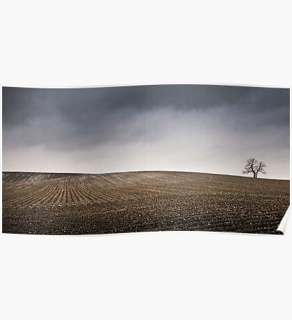 Landscape Bones Poster