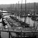 Boats in the Harbor by Shaina Haynes