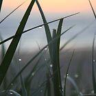 morning dew by Derek Andersen Photography