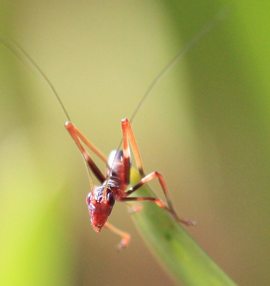 Anti Ant by Selina Tour