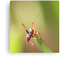 Anti Ant Canvas Print