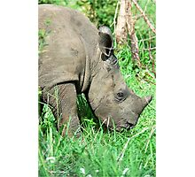 UP CLOSE THE BABY RHINO - White Rhinoceros - Ceratotherium simum  -  WIT RENOSTER Photographic Print