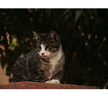 Feral Kitty Photographic Print