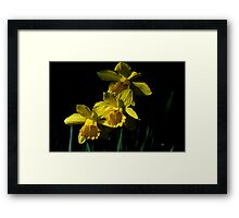 Golden Bells Framed Print