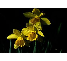 Golden Bells Photographic Print