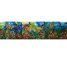 Butterfly - Triptych Photographic Print