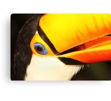 Detailed Portrait of a Toco Toucan at Iguassu, Brazil.  Canvas Print