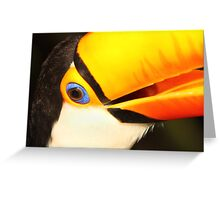 Detailed Portrait of a Toco Toucan at Iguassu, Brazil.  Greeting Card