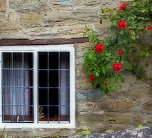 Window and Roses by Steve Green