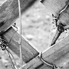 The Fence by LeighAth