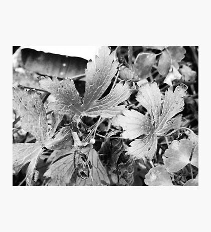 Autumn Plant Photographic Print