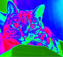 Psychedelic Tabby Haze by mariesym