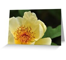 Simply a rose Greeting Card