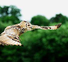 Eagle Owl in flight by Owen Burke