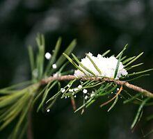 Snow Day by itskanoe