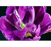Deepness of Nature Photographic Print