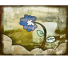the blue flower Photographic Print