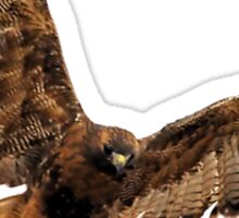 Red- Tailed Hawk 5 Tee Sticker