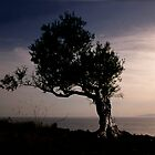 The ultimate olive tree by duncananderson