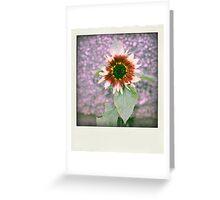 5 Greeting Card