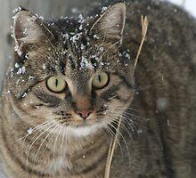 Snowflakes On My Whiskers - Puma by PrairieRose