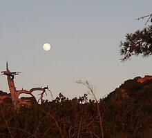Moonrise at Torrey Pines by Laurel Talabere