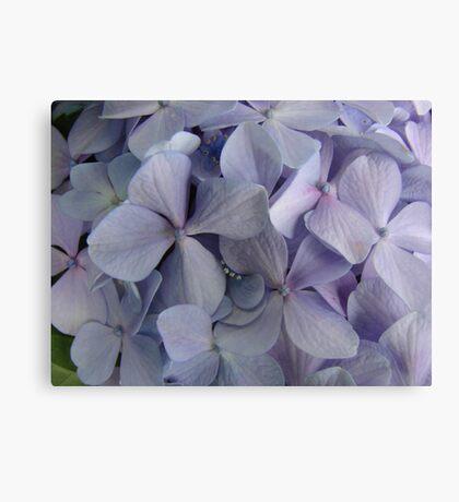 Purple Hydrangea Bunch Canvas Print