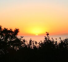 Sunset at Torrey Pines by Laurel Talabere
