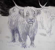 Highland Cattle Drawing by MikeJory