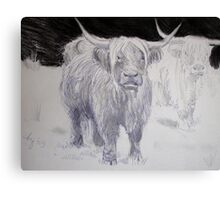 Highland Cattle Drawing Canvas Print