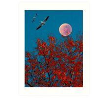 Moonlit Pelicans Art Print