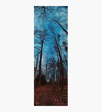 Trees Overlook Photographic Print