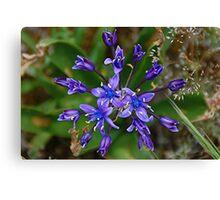 Deep Blue Flower Canvas Print